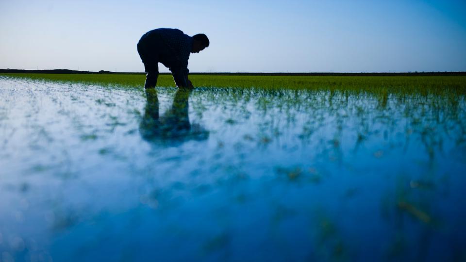 日本で唯一!『カリフォルニアの有機米で酒を醸すという挑戦』 サムネイル